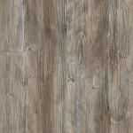 R55004R4531 Ponderosa Pine